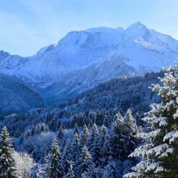Les sapins majestueux en hiver