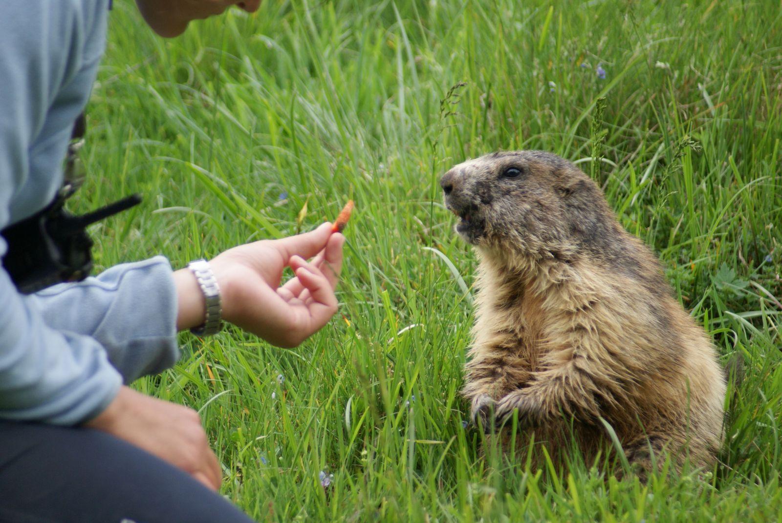 Gouter des marmottes parc de merlet
